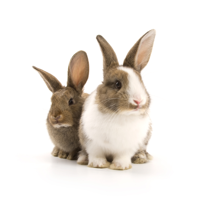 Your rabbit can be vaccinated from 5 weeks of age at Crescents Vets Tewkesbury
