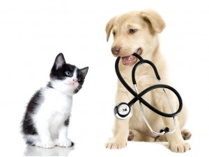 A cute kitten and puppy at Crescent vets in Tewkesbury